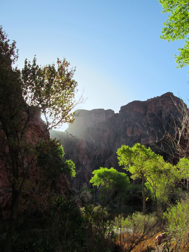 Spring morning light at the bottom of the Canyon. I think Jesus would have liked it here.