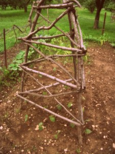 A trellis fits the plant it is intended to help find the light.  Plants just need old sticks.