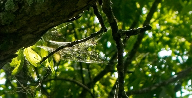 wildacres-spider-web.jpg