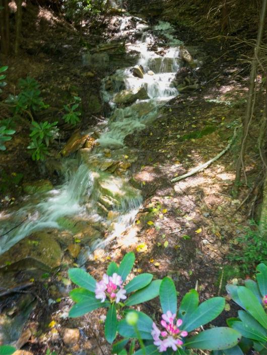 trail falls