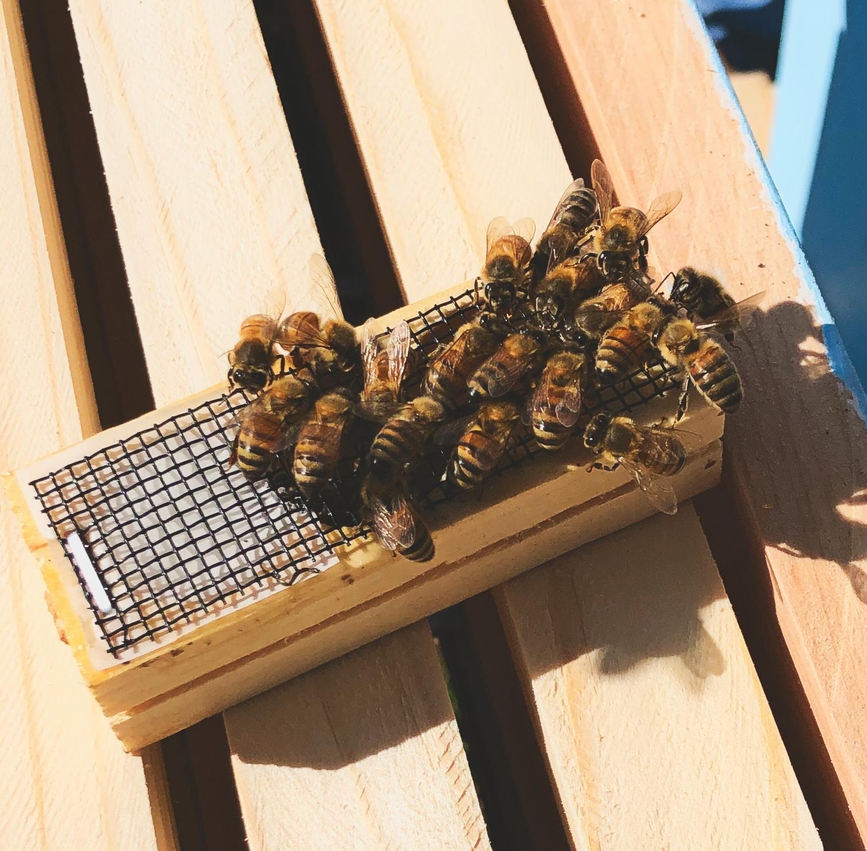 Bee lindwood's queen